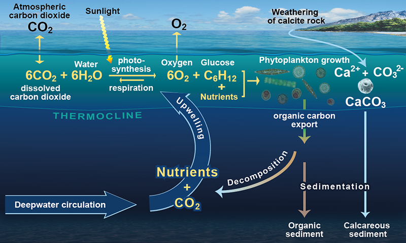 Abc Background The Biological Carbon Pump