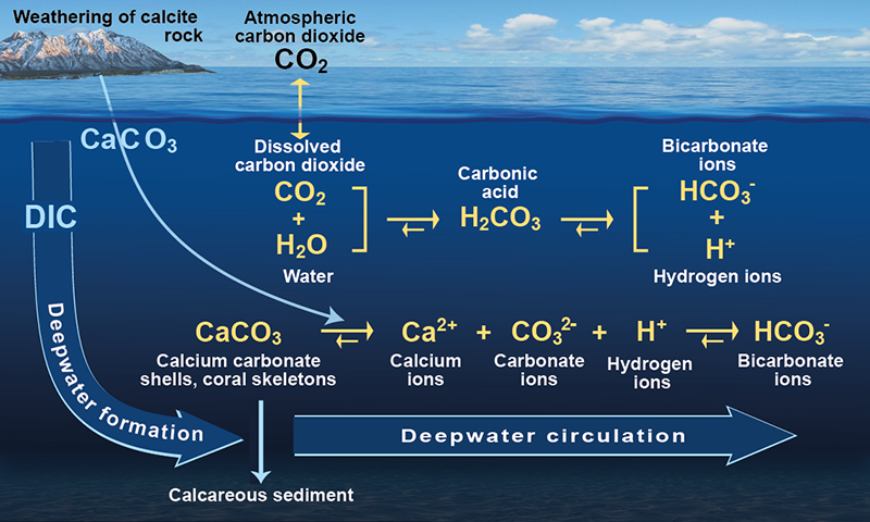 Atlantic Biogoechemical  Abc  Fluxes   Science Background